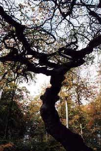 Et specielt træ - ©Tommy Hansen
