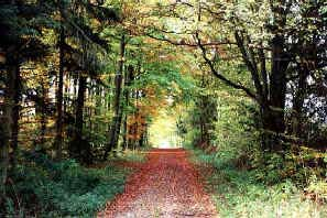Dejlige ture i skoven - ©Tommy Hansen